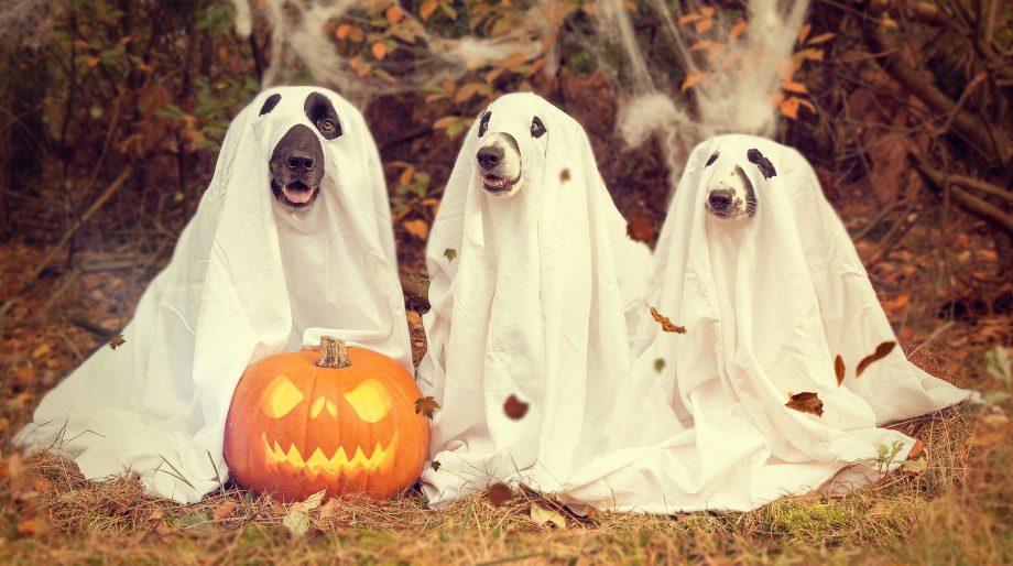 ¿Puedes encontrar al oso polar escondido entre los fantasmas en este reto visual?